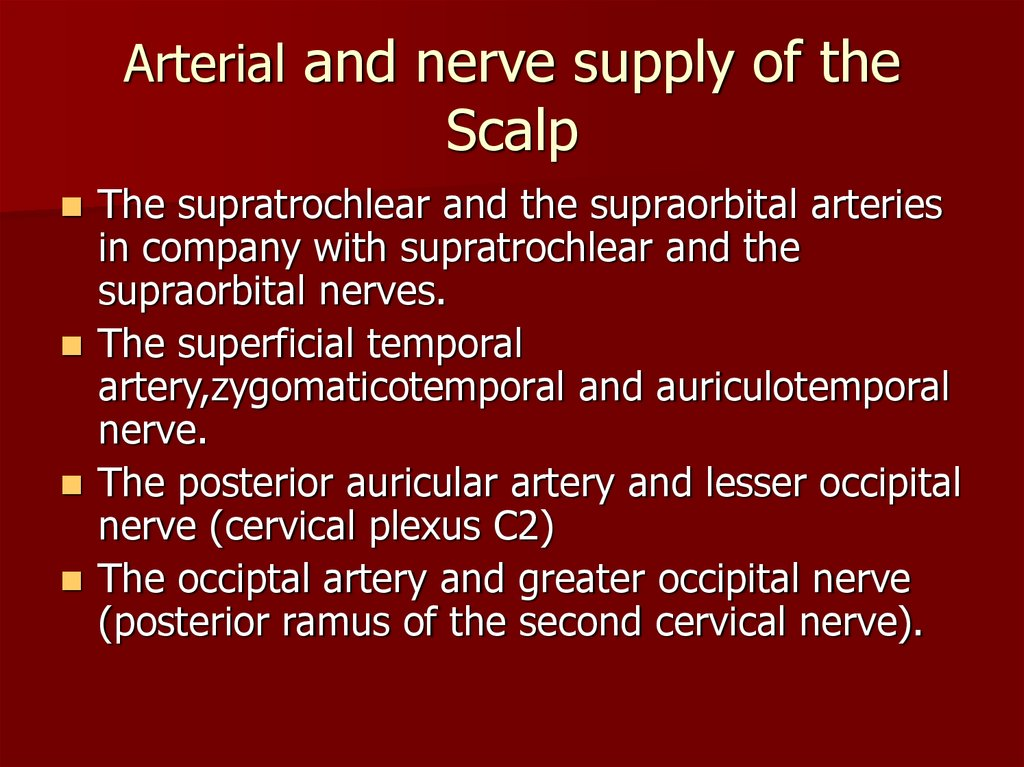Arterial and nerve supply of the Scalp