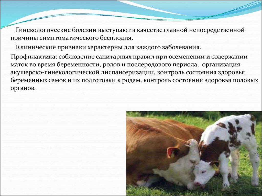 Бесплодие сельскохозяйственных животных - презентация онлайн