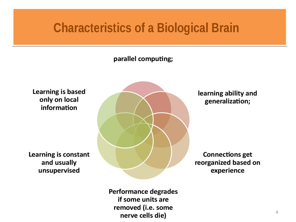 Characteristics of a Biological Brain