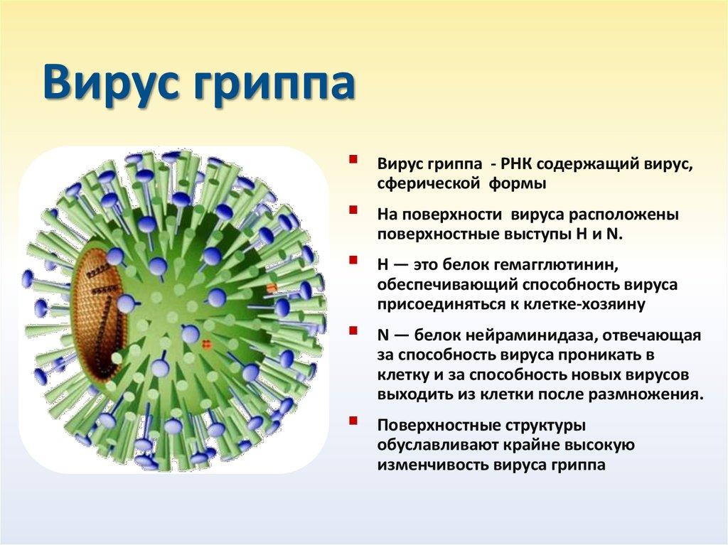 Вируса гриппа картинки