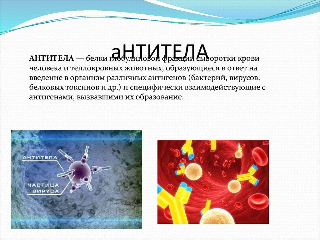 аллергия антитела
