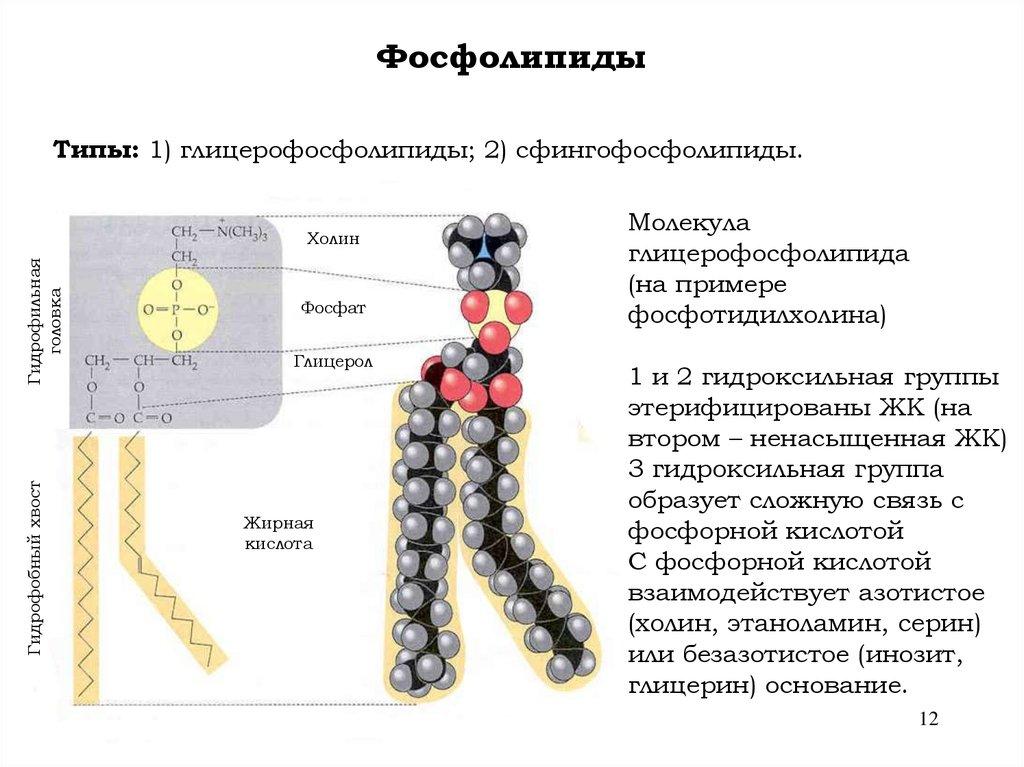 Структуры мембраны стероиды стероиды агрессия