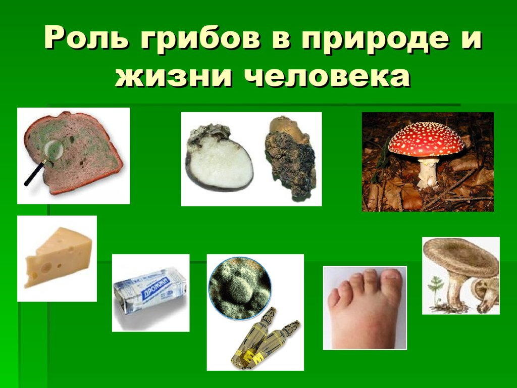 картинка роль грибов в жизни человека