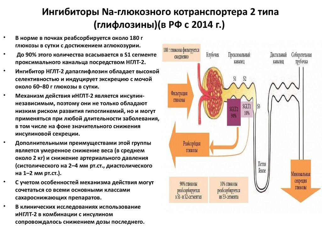 Ингибиторы натрий глюкозного котранспортера 2 типа