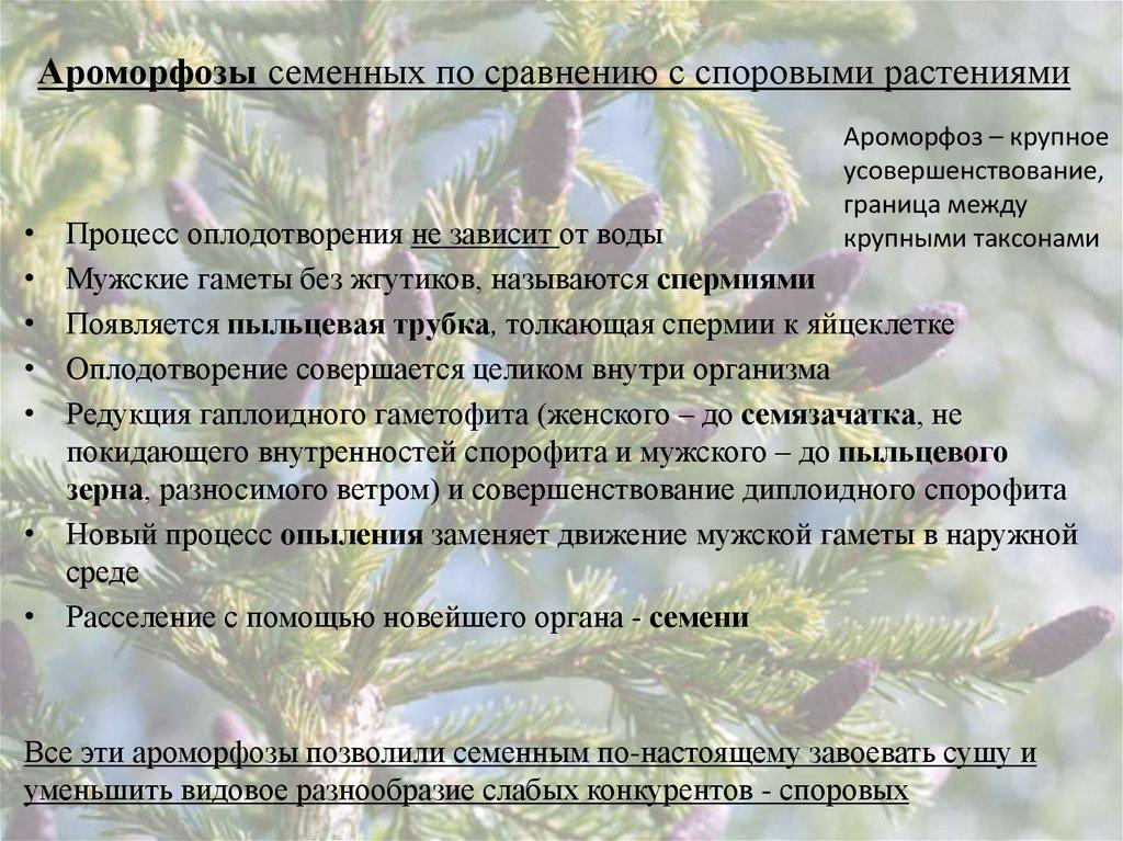 знакомство со споровыми растениями