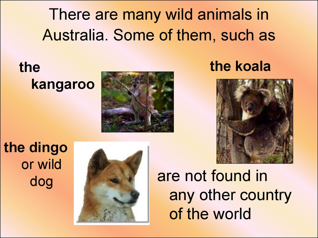 There are many wild animals in Australia. Some of them, such as