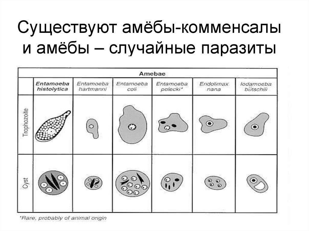 основные паразиты организме человека
