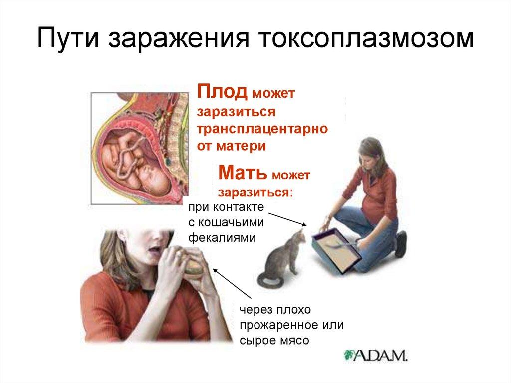 любовница князя токсоплазмоз симптомы у женщин учетКомплект обязательных журналов