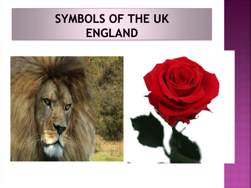 Symbols of the UK England