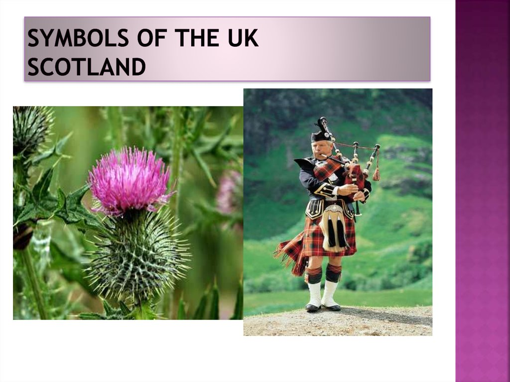 Symbols of the UK Scotland