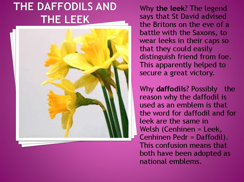 The Daffodils and the leek