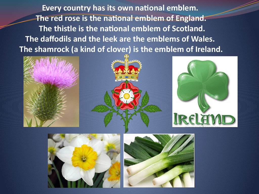 Every country has its own national emblem. The red rose is the national emblem of England. The thistle is the national emblem of Scotland. The daffodils and the leek are the emblems of Wales. The shamrock (a kind of clover) is the emblem of Ireland.