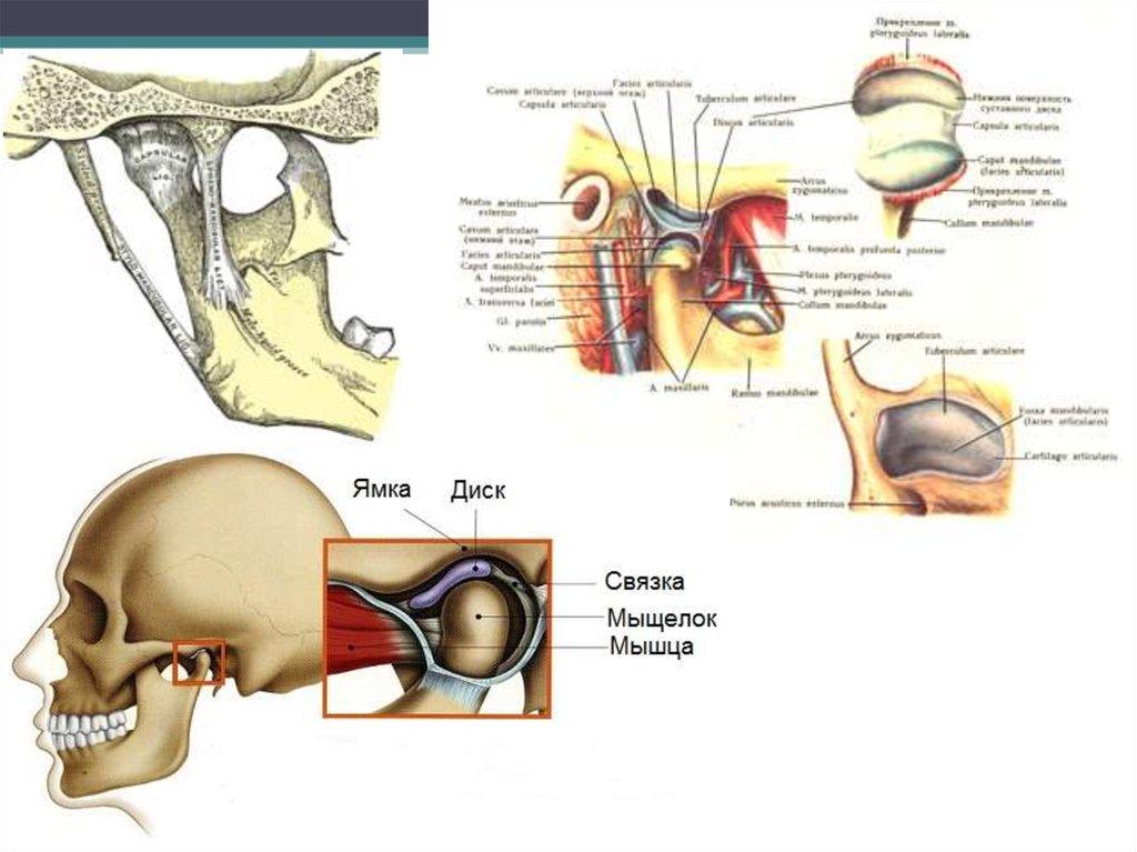 Разрыв суставной капсулы челюсти ушибла локоть болит плечо