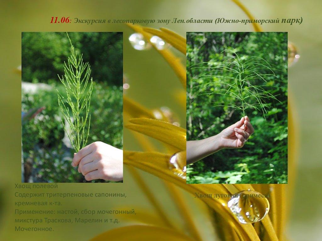 Сайт ЮЛА  бесплатные объявления на Юле