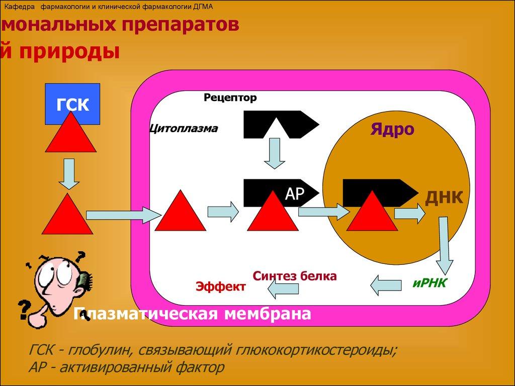 Глюкокортикостероиды в фармакологии кровью и потом анаболики гоблин скачать торрент в хорошем качестве