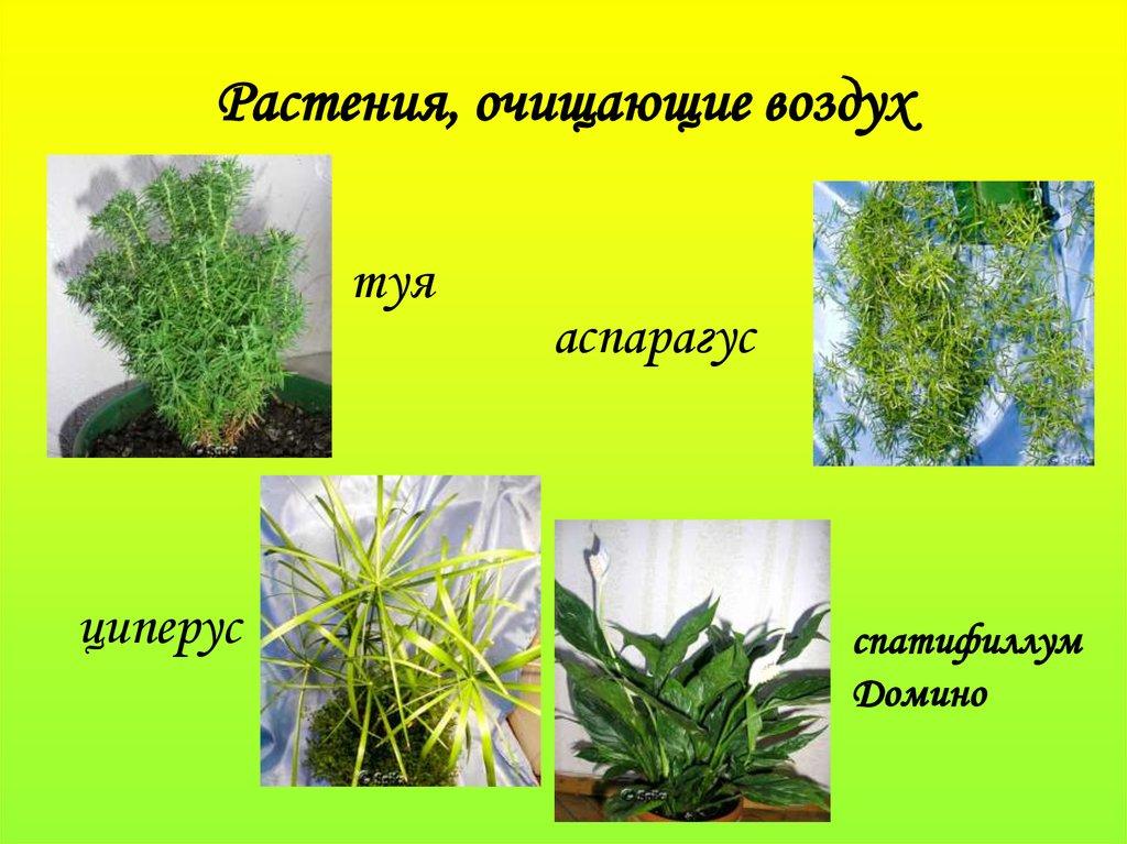 картинки воздух для растений мастиф порода редкая