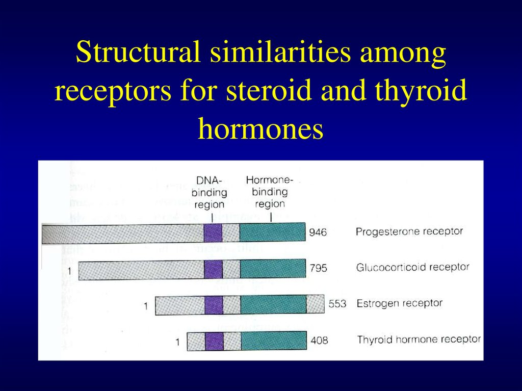 Structural similarities among receptors for steroid and thyroid hormones