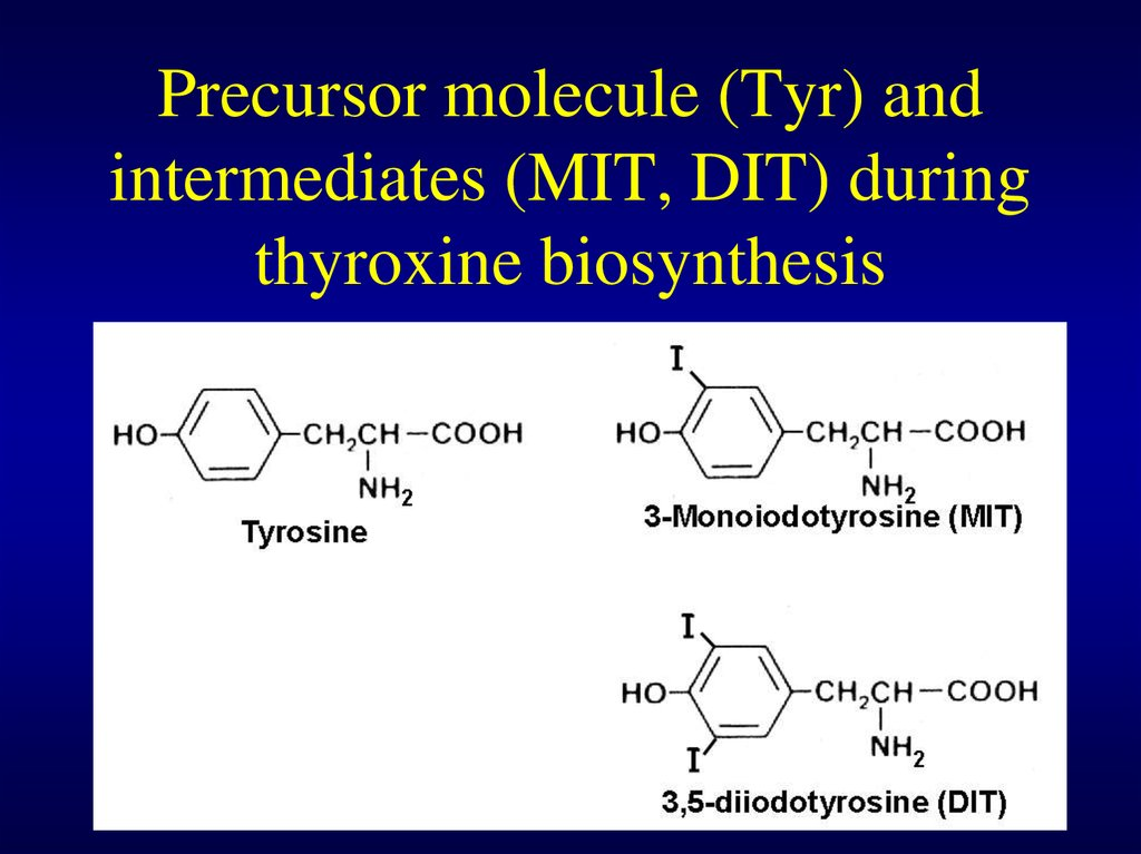 Precursor molecule (Tyr) and intermediates (MIT, DIT) during thyroxine biosynthesis