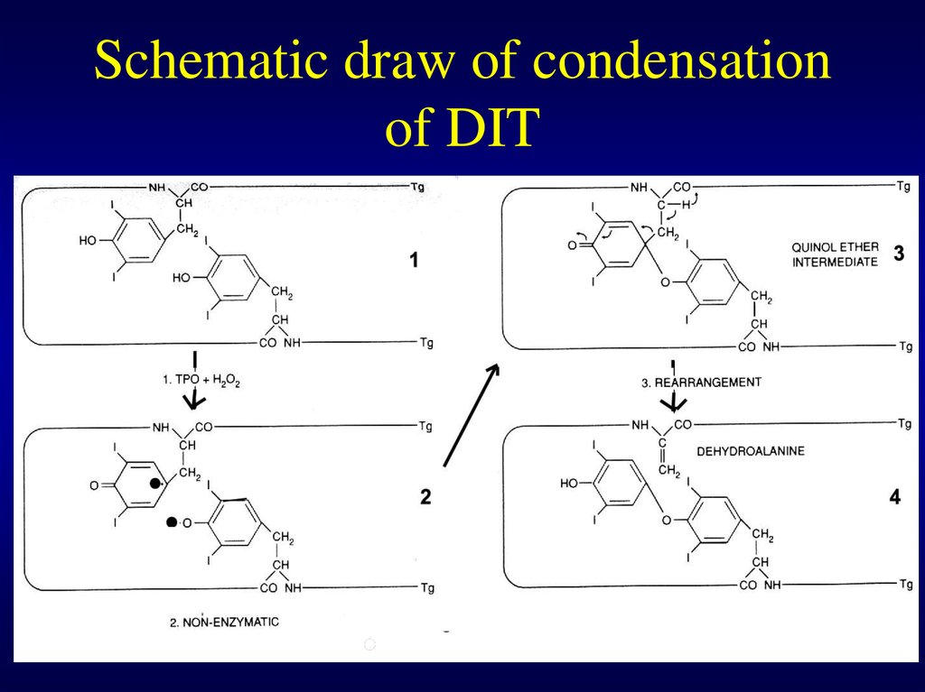 Schematic draw of condensation of DIT