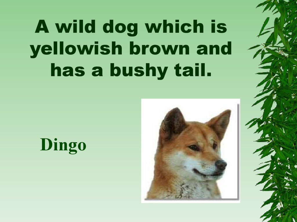 A wild dog which is yellowish brown and has a bushy tail.