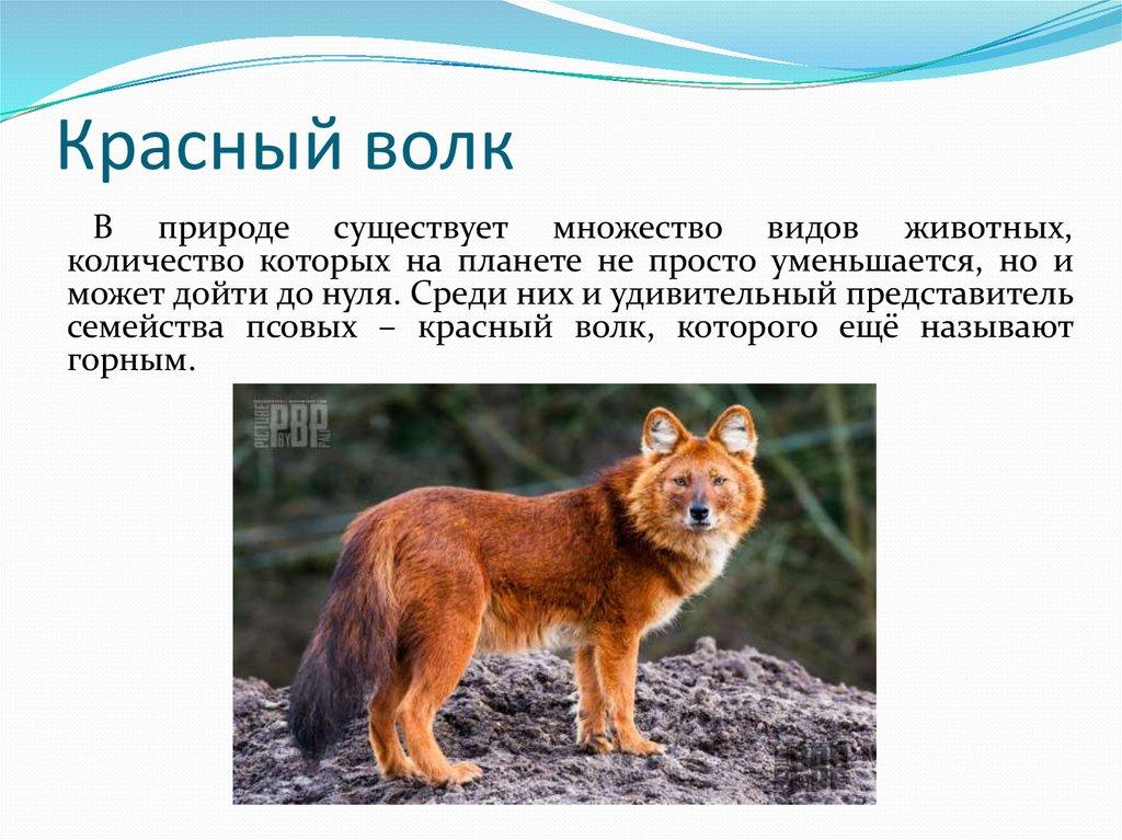 Фото и описание животного россии учащийся строительного