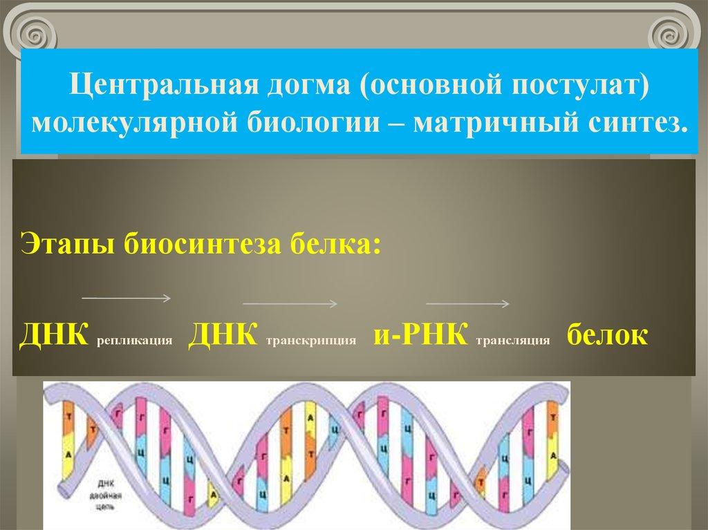 Основные открытия молекулярной биологии презентация