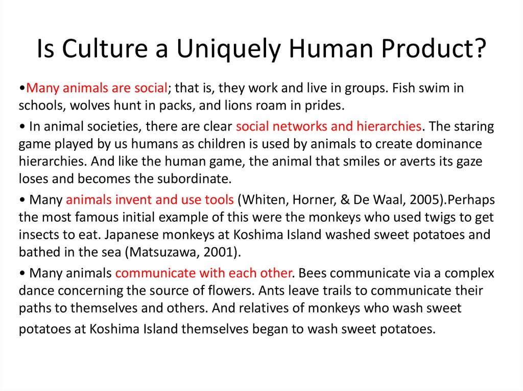 Is Culture a Uniquely Human Product?