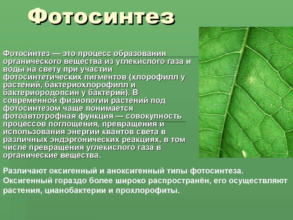 Сказки о фотосинтезе низкие
