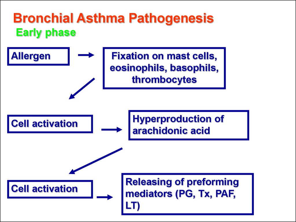 Bronchial Asthma Pathogenesis Early phase