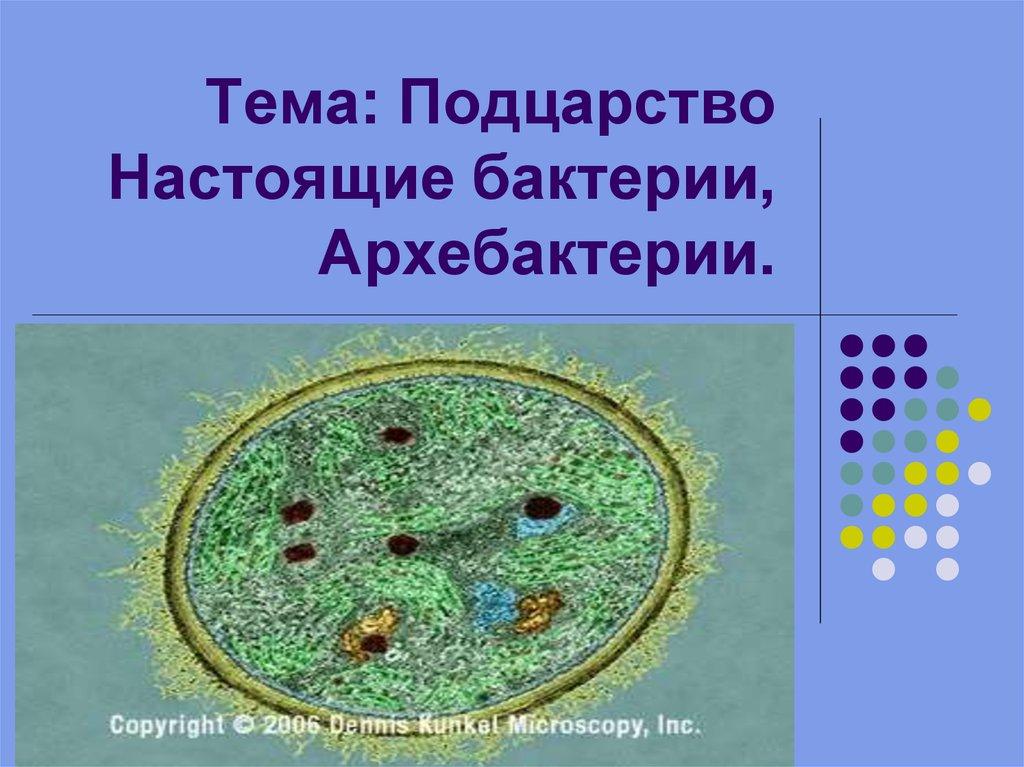 отзывы подцарство архебактерии и оксифотобактерии мнению
