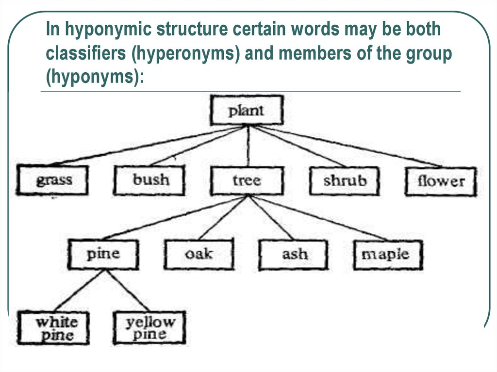 In hyponymic structure certain words may be both classifiers (hyperonyms) and members of the group (hyponyms):