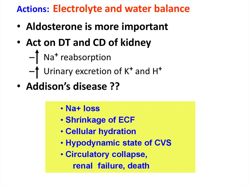 Actions: Electrolyte and water balance