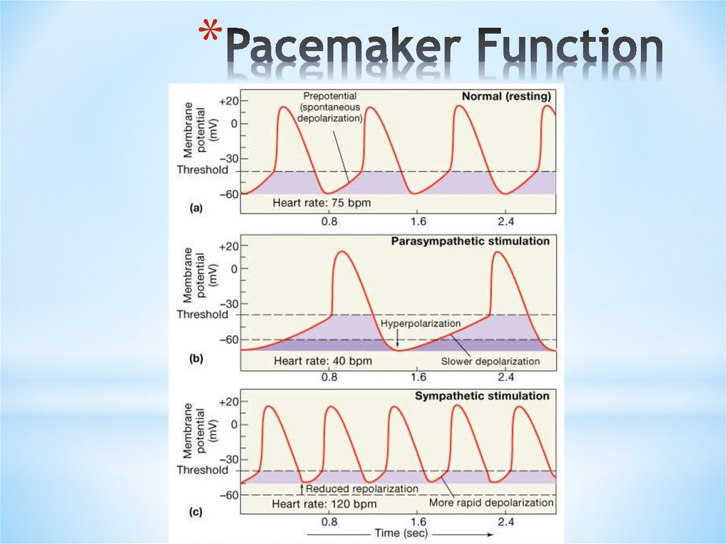 Pacemaker Function