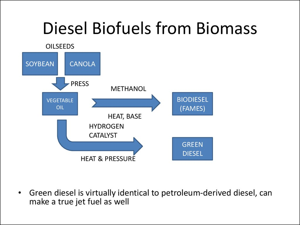 a study of biomass Examples of biomass include landfill gas, wood, crops, garbage and alcohol fuels biomass is renewable energy that comes from plants and garbage provides another source of biomass organic materials like leaves, lawn clippings and food scraps are burned and turned into energy.