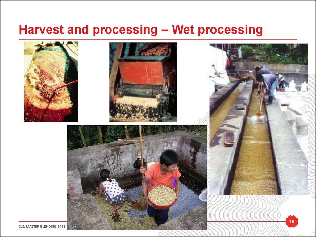 Harvest and processing – Wet processing