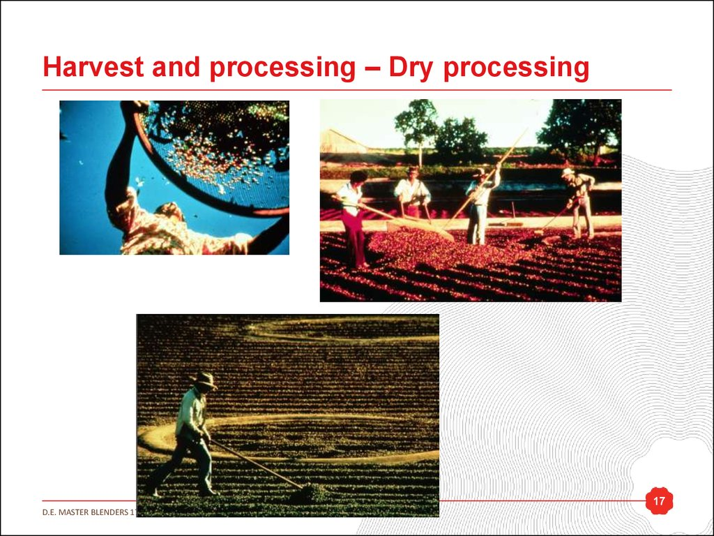 Harvest and processing – Dry processing