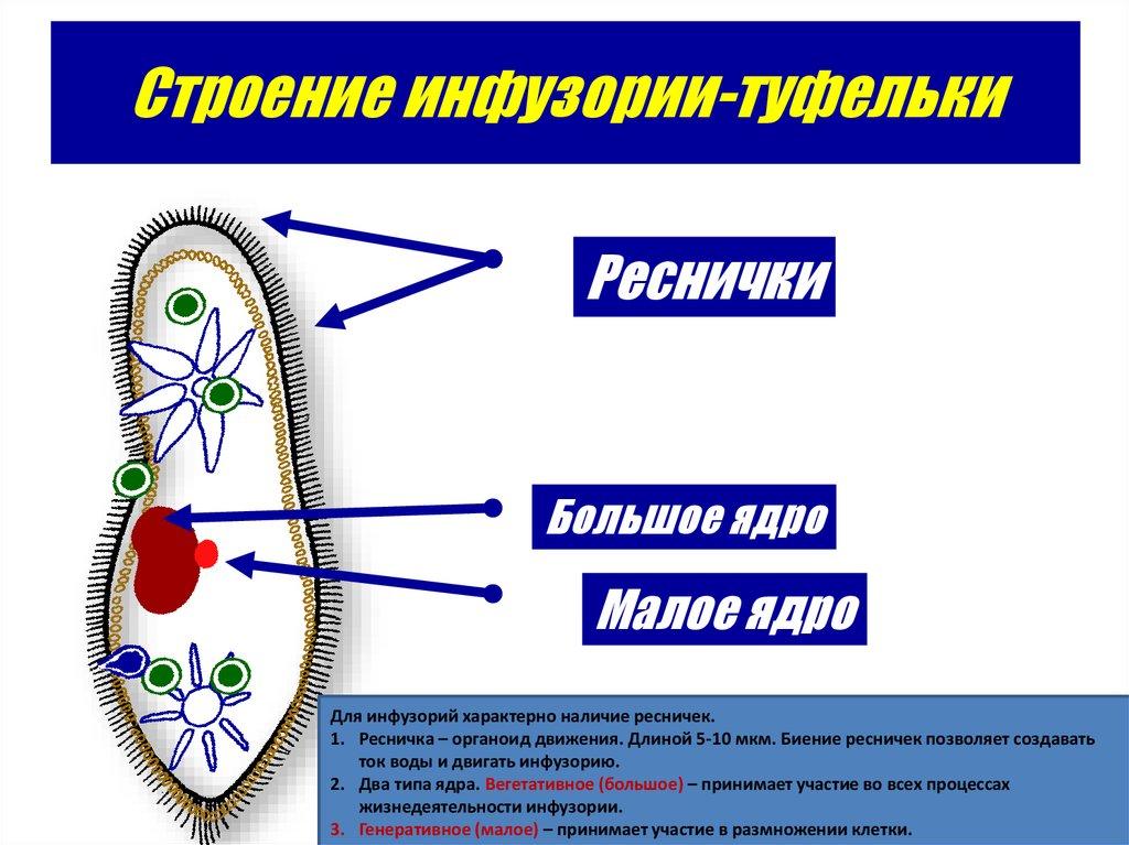 классификация вредных веществ реферат
