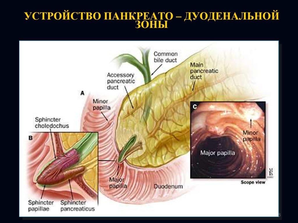 Косвенные признаки патологии панкреато билиарной зоны