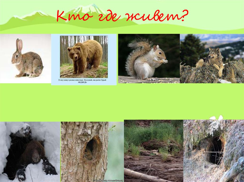следует жилища животных леса картинки методисты
