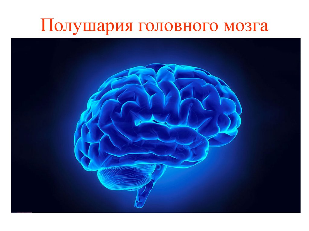 effects of computer on human brain The effects of modern lifestyle on the brain how the human brain compares to a computer the human brain is usually compared.