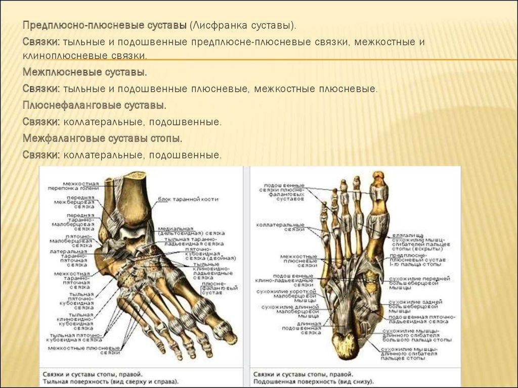 Сустав лисфранка артроз деформирующий коленного сустава лечение нано пластом