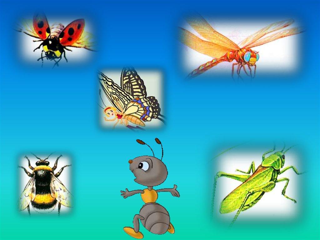 насекомые картинки слайд одна