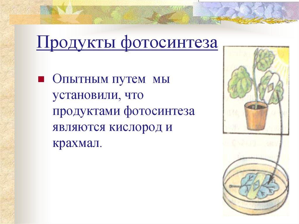 теннисные фотосинтез и его продукты создаем
