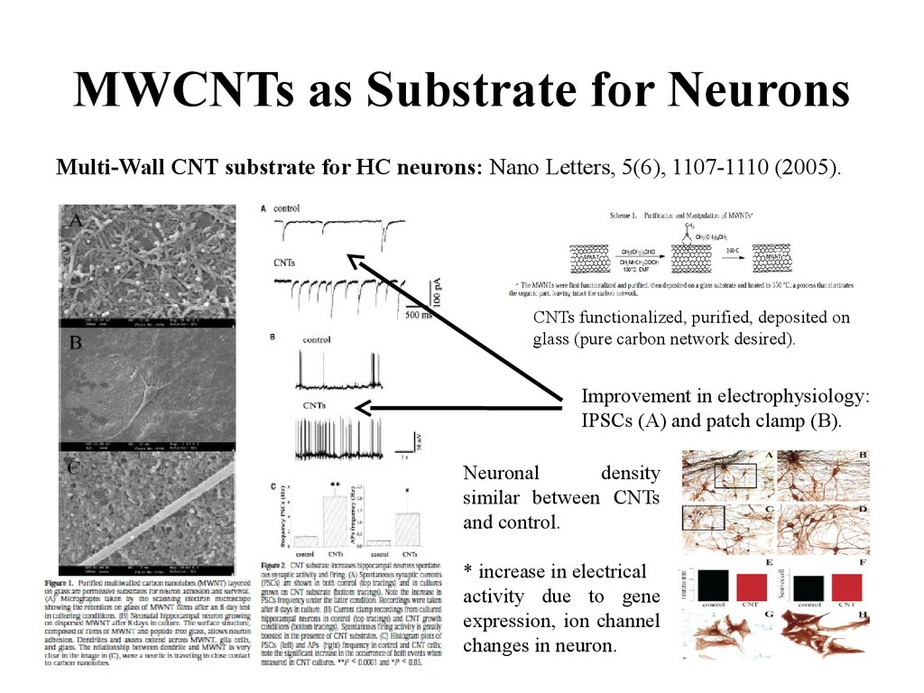 MWCNTs as Substrate for Neurons