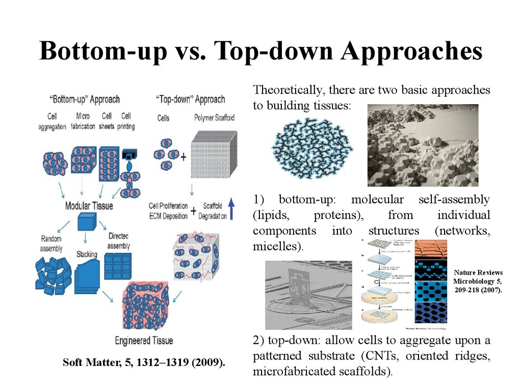 Bottom-up vs. Top-down Approaches