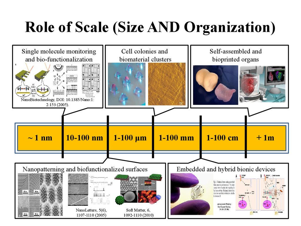Role of Scale (Size AND Organization)