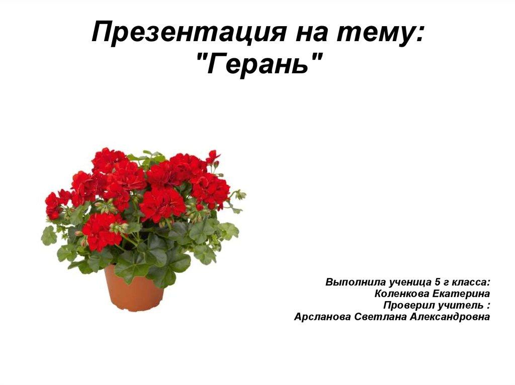 Уход за геранью пеларгония Комнатные растения и цветы