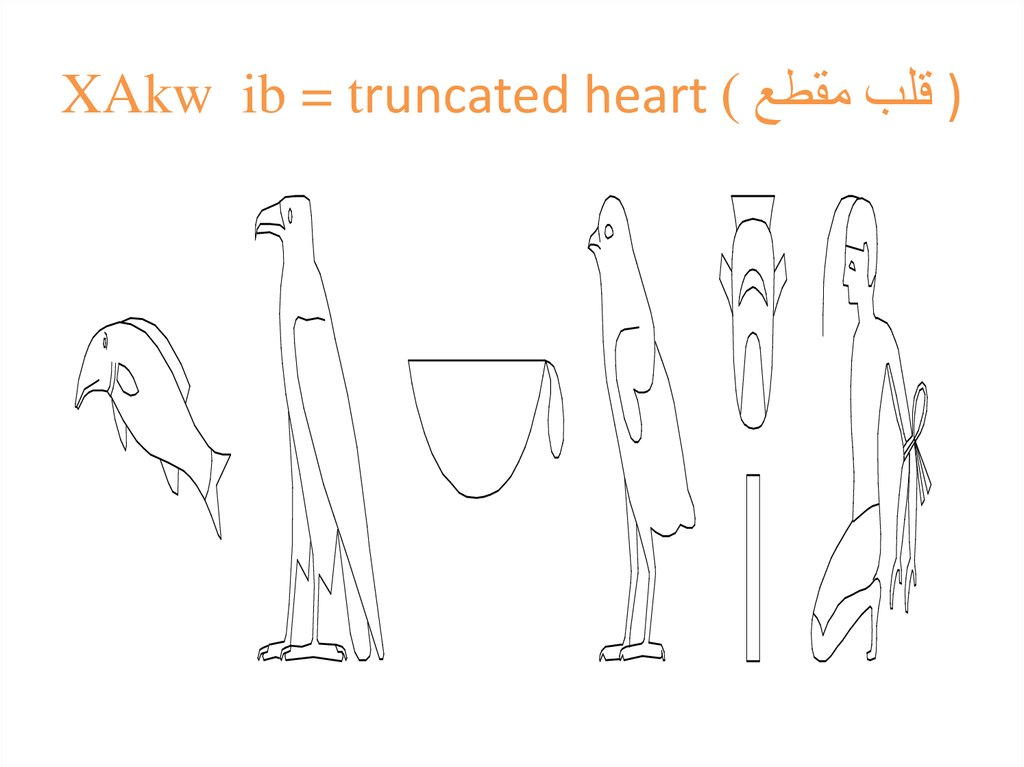 XAkw ib = truncated heart قلب مقطع ) )