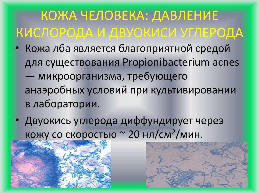 Микрофлора кожи человека реферат 1249