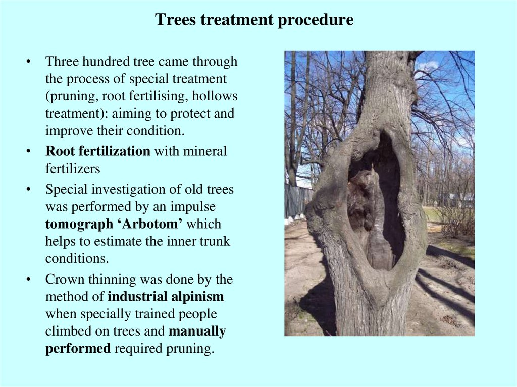 Trees treatment procedure